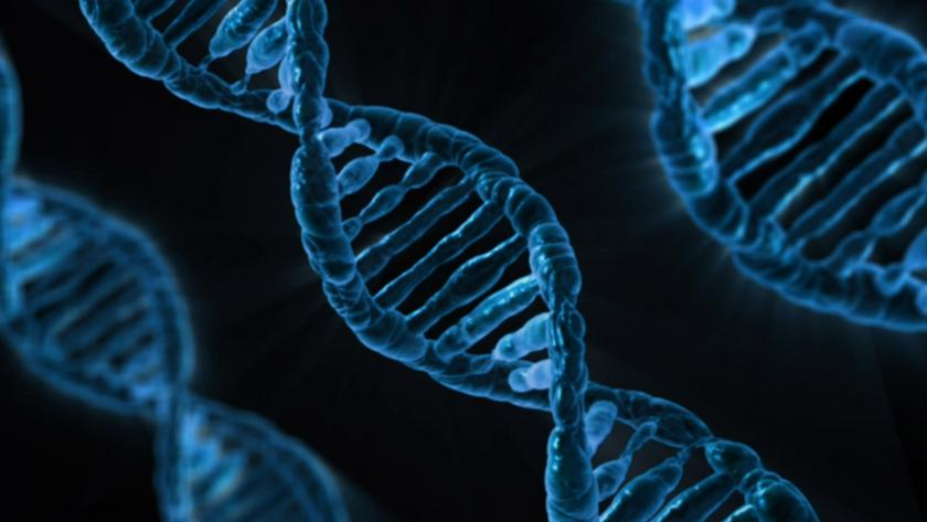Sequenced DNA