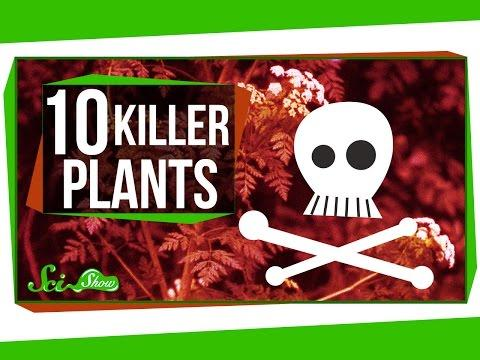 Deadly Nightshade, Oleander Shrub, Wolfsbane, And 7 Other Poisonous Plants That Can Kill You