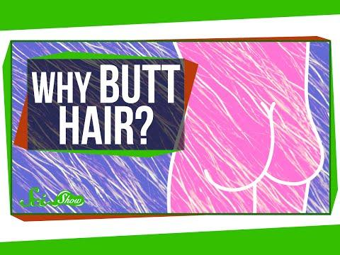 Anatomy And Physiology 101: Science Explains Why Butt Hair Exists On ...