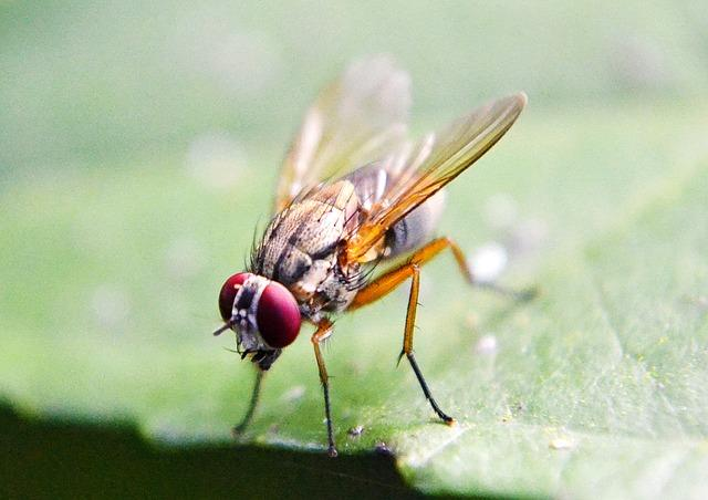 Fruit Fly Anxiety