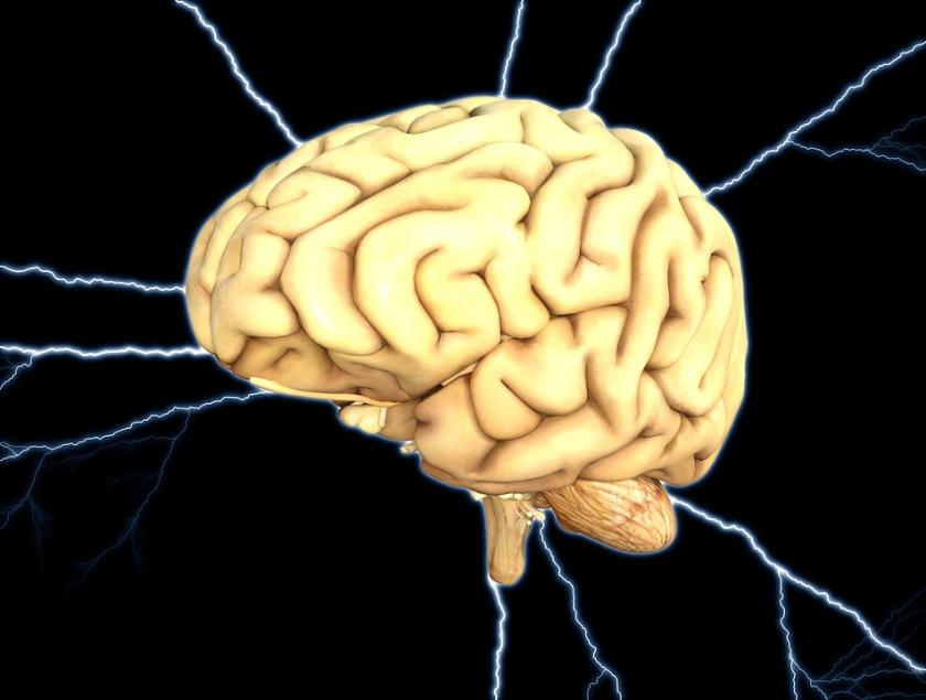 How Does Fitness Affect Memory Brain Structure Linked To Better