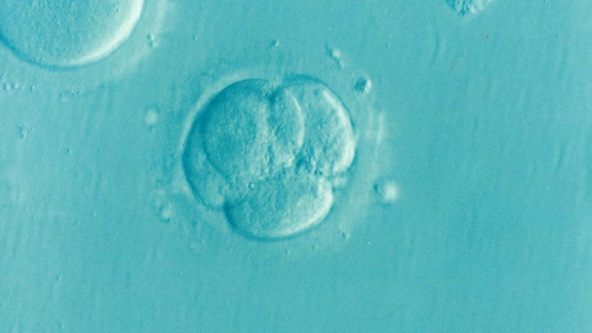 Created the first embryo of future human clones