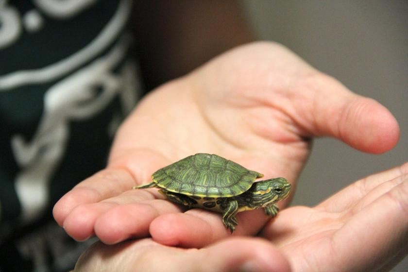 How To Take Care Of Pet Turtles And Snakes