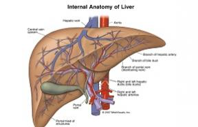 Cell Transplantation reports a success in treating end-stage liver disease