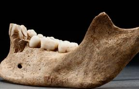 Jaw found in Jamestown