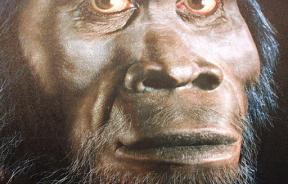 Diet Likely Changed For Hominids 3.5 M Years AGo