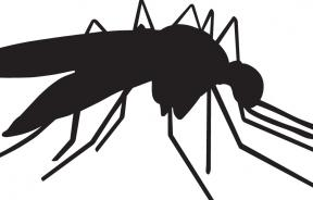 Shutterstock image of mosquito