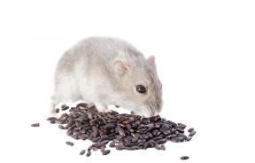 Rat Poison Manufacturer Ceases Production