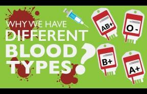 In The Blood: Antigens In Red Blood Cells Determine Human Blood Types