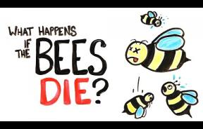 Honey Bees Are Vital To Our Way Of Life; What Would Happen If They All Die