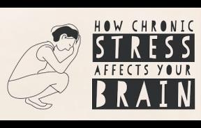 Stress And The Brain: High Cortisol Levels Can Damage Brain Structure, Cognitive Function