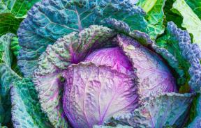cabbage-vegetable-power-green
